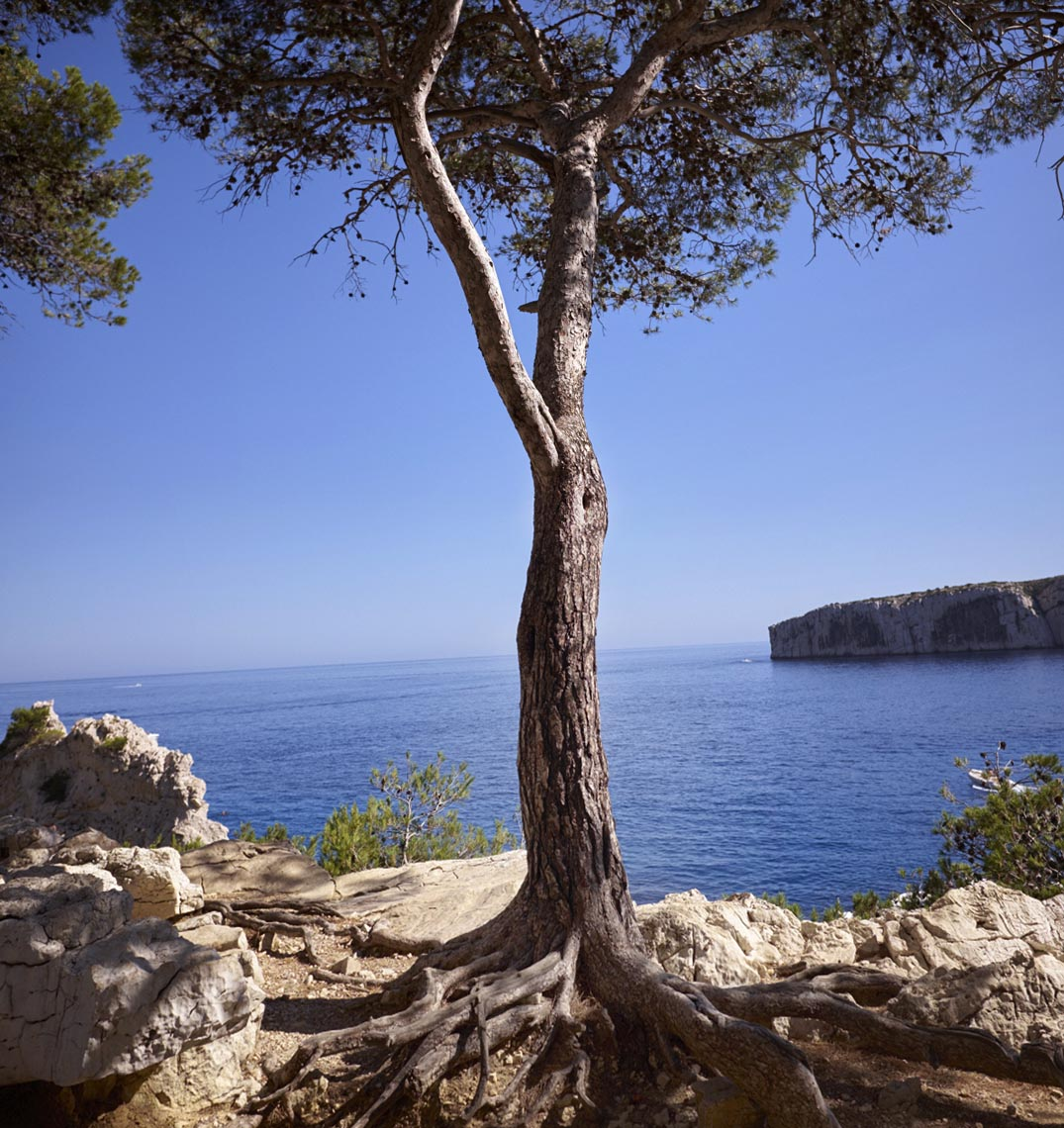 Tree Calanque Panorama1
